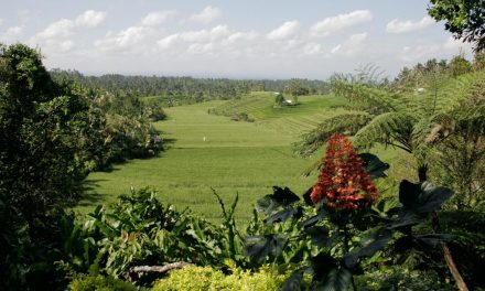 Bali, Toute la beauté du monde ?
