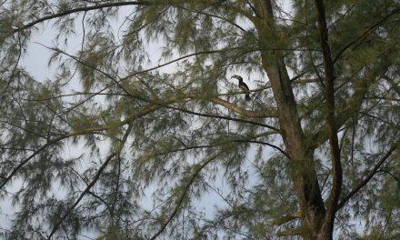 Identifier la flore et les oiseaux en voyage